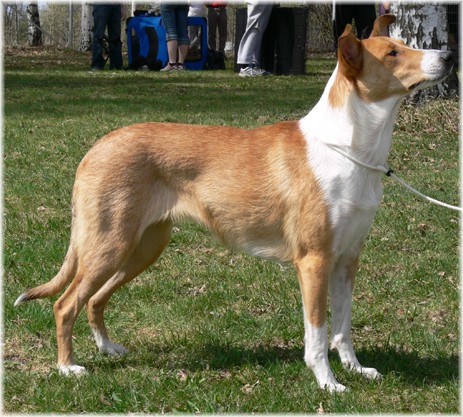 Kennel Tanning Smooth Collie
